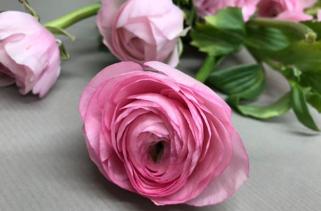 Seasonal Flower: Ranunculus