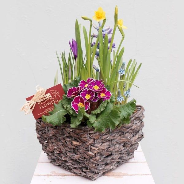 Planted Bulb Arrangement
